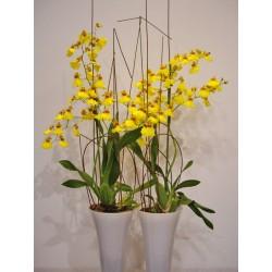 Orquidea oncidium con cristal de color