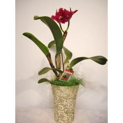 Orquidea cattleya en ceramica