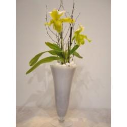Orquidea paphiopedilum en copa de cristal