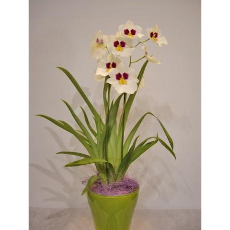 Orquidea miltonia blanca en cristal de color