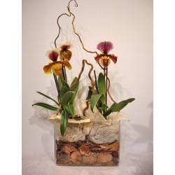 2 Orquideas papiophedium en cristal