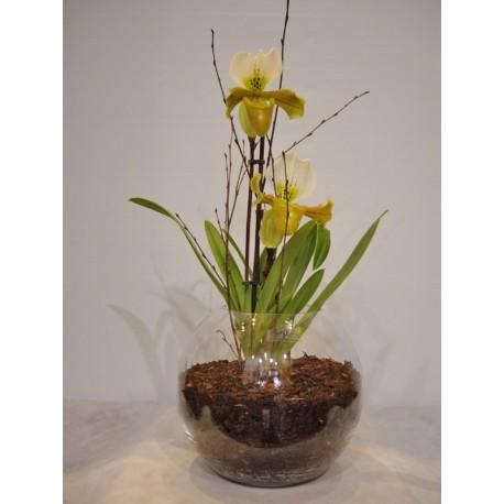Orquidea papiophedium en bola de cristal