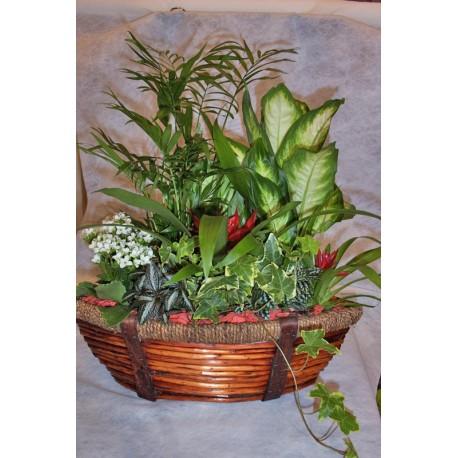 Cesta de plantas estilo barco