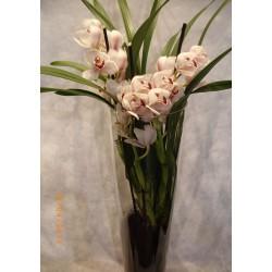 Orquidea cynbidium en cristal