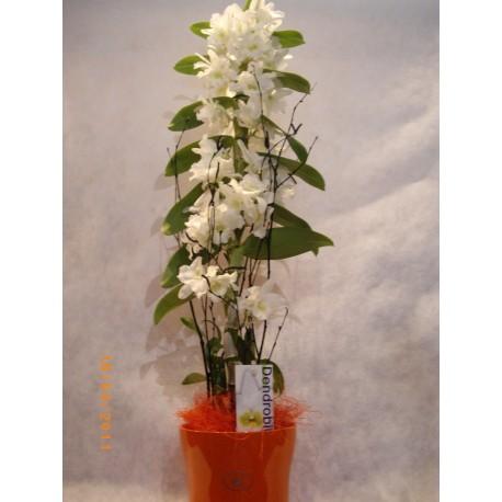 Orquidea dendrobium blanca
