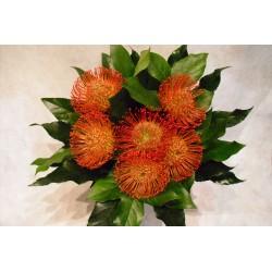 Bouquet proteas nutam