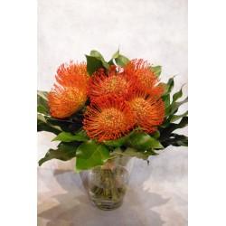 Florero de cristal con Proteas Nutam