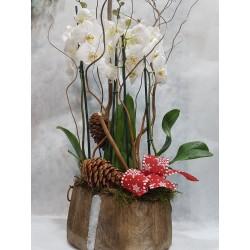 Centro con 2 orquideas Phalenopsis navideño.