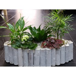 Conjunto de plantas