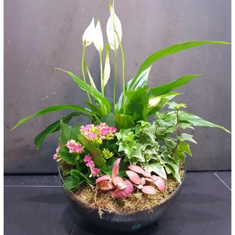 Conjunto de plantas en cristal
