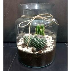 Recipiente de cristal con cactus