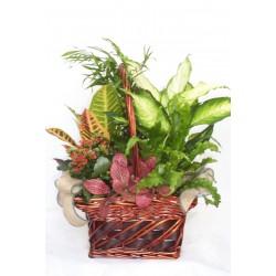 Cesta con plantas de interior variadas