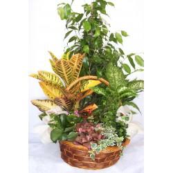 Cesta con plantas variadas
