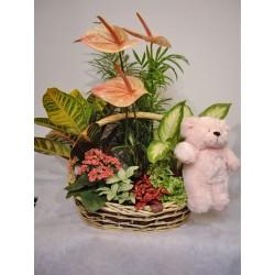 Cesta con plantas y flores