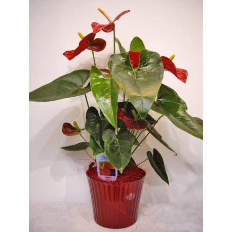 Anthurium rojo en ceramica granate